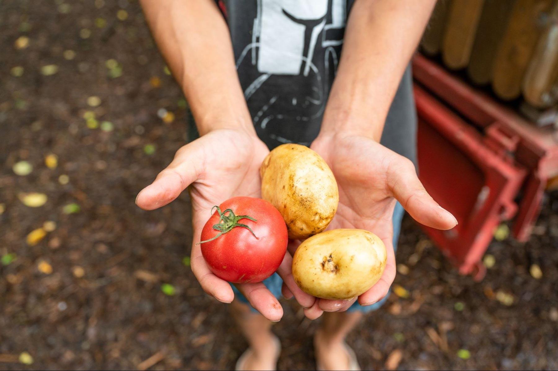 モバイルヴィレッジぼちぼちで採れた野菜